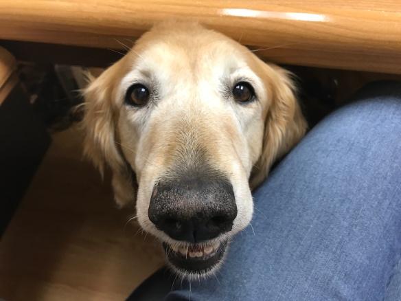 Sadie Begging